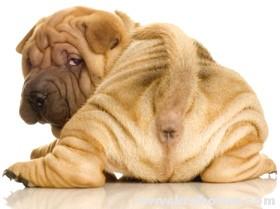 Ветеринарные дела: болезни и лечение собак